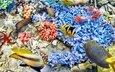 рыбки, океан, подводный мир, коралловый риф