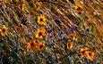 цветы, трава, поле, осень, луг