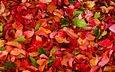 texture, leaves, autumn, the crimson