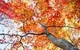 дерево, листья, осень, ствол