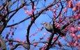 the sky, flowers, tree, bird, spring