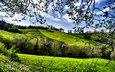 деревья, зелень, поля, весна