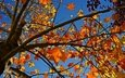 the sky, nature, tree, leaves, branch, autumn, yellow, sky, fall