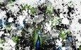 background, bird, peacock