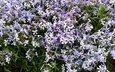 цветы, настроение, релакс, дача, отых