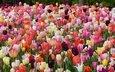 весна, тюльпаны