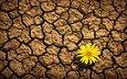 земля, цветок, лепестки, трещины, засуха