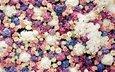 цветы, бутоны, розы, орхидеи