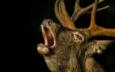 deer, black background, animal, horns, andywak