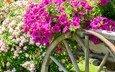 цветы, сад, телега