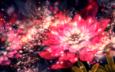 цветы, абстракция, цветок, лепестки, цвет, форма, фрактал