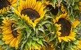 цветы, букет, подсолнухи
