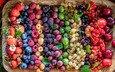 малина, клубника, ягоды, вишня, много, черника, смородина, крыжовник, блюдо