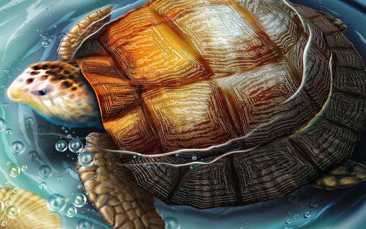 рисунок, вода, черепаха, figure, water, turtle
