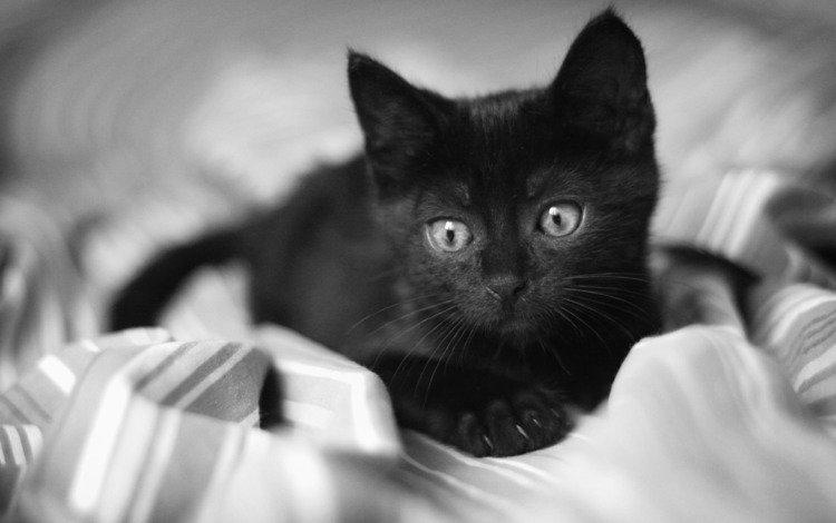 глаза, взгляд, котенок, черный, грустный, одеяло, eyes, look, kitty, black, sad, blanket