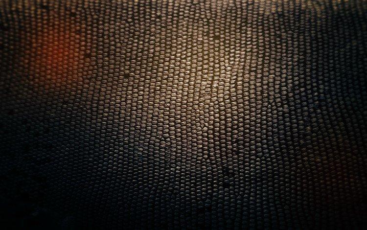 свет, текстура, фон, тень, змея, кожа, light, texture, background, shadow, snake, leather