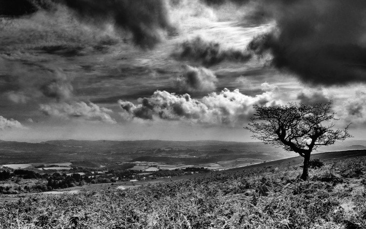 clouds, tree, black and white