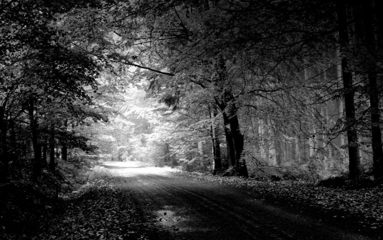 road, trees, nature, landscape, black and white