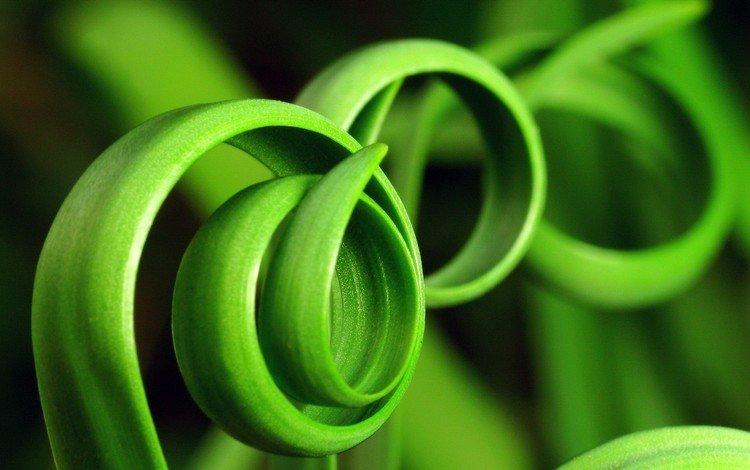 трава, зелень, фото, grass, greens, photo