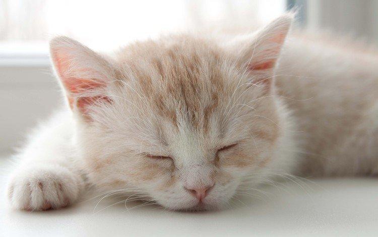 сон, котенок, sleep, kitty