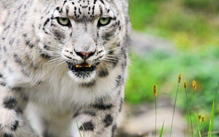 глаза, животные, кошка, ожидание, киса, животно е, eyes, animals, cat, waiting, kitty