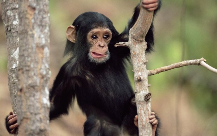 животные, удивление, обои с животными, обезьяна, мордаха, animals, surprise, wallpaper with animals, monkey, mordaha