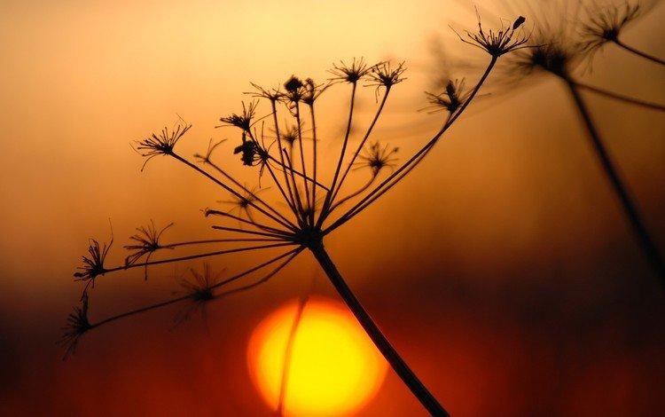 branch, the sun, plant