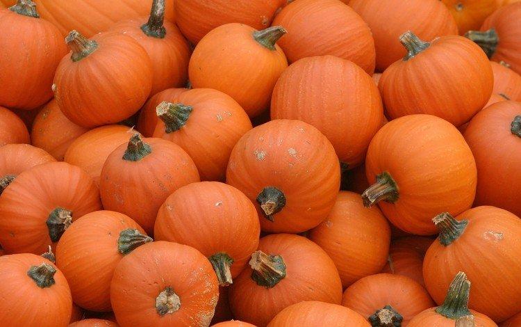 оранжевый, тыквы, pumpkins, orange, pumpkin