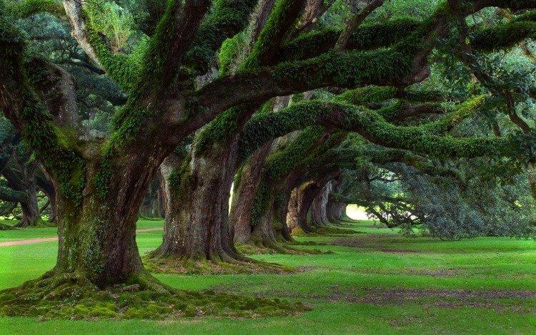 трава, деревь, green wallpapers, деревья, nature walls, природа, зелень, лес, парк, лето, весна, grass, trees, nature, greens, forest, park, summer, spring