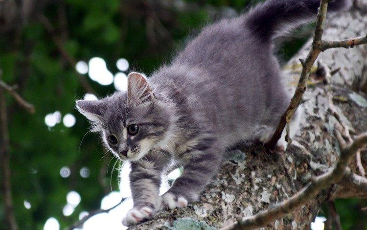 дерево, котенок, серый, кошки, катейка, tree, kitty, grey, cats, kataka