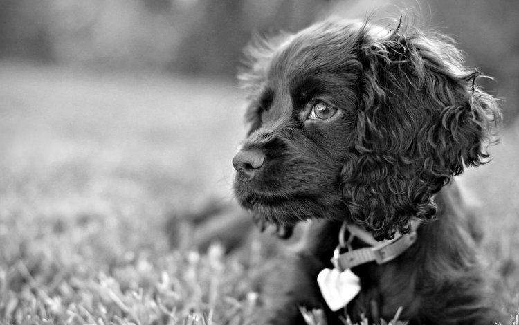 трава, взгляд, собака, пес, чёрно-белый, грустные глаза, grass, look, dog, black and white, sad eyes