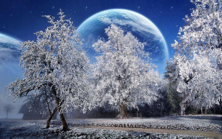 trees, snow, winter, planet