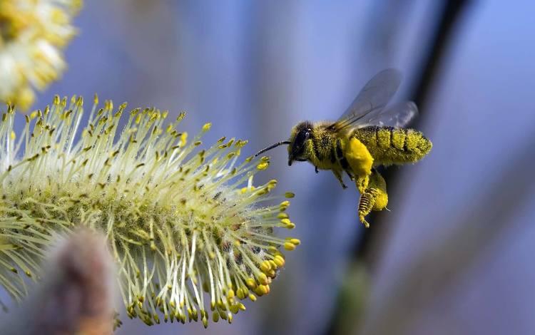 полет, цветок, пчела, flight, flower, bee