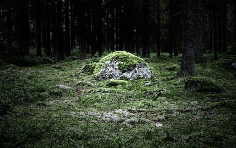 лес, камень, magicstone, forest, stone