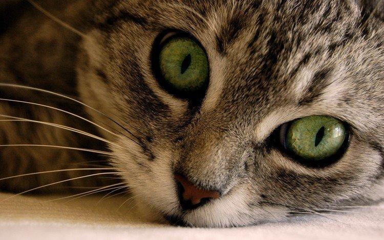 макро, кошаки, кошки, macro, koshak, cats
