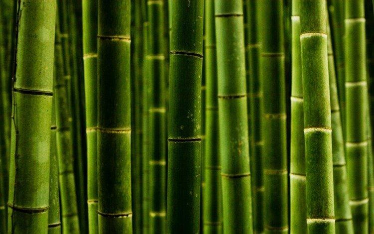 природа, обои, макро, фото, стволы, бамбук, nature wallpapers, green style, macro photos, nature, wallpaper, macro, photo, trunks, bamboo
