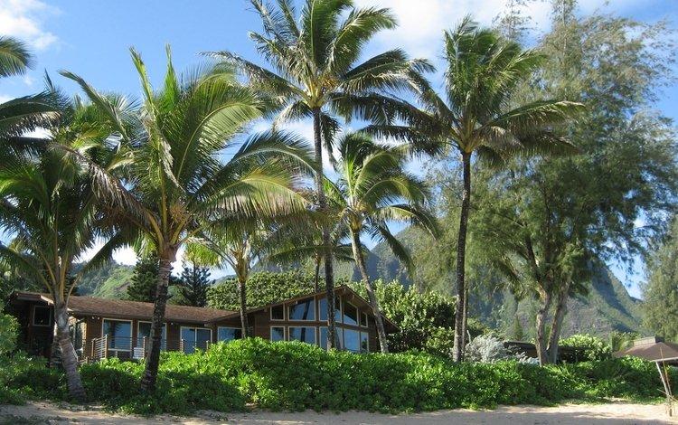 пляж, лето, пальмы, дом, beach, summer, palm trees, house