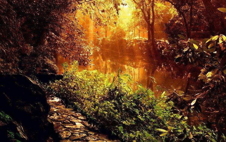 свет, река, растения, light, river, plants
