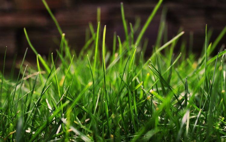 трава, зелень, макро, grass, greens, macro
