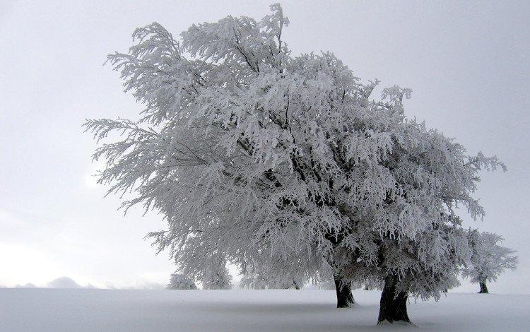 деревья, снег, природа, зима, пейзажи, зимние обои, trees, snow, nature, winter, landscapes, winter wallpaper
