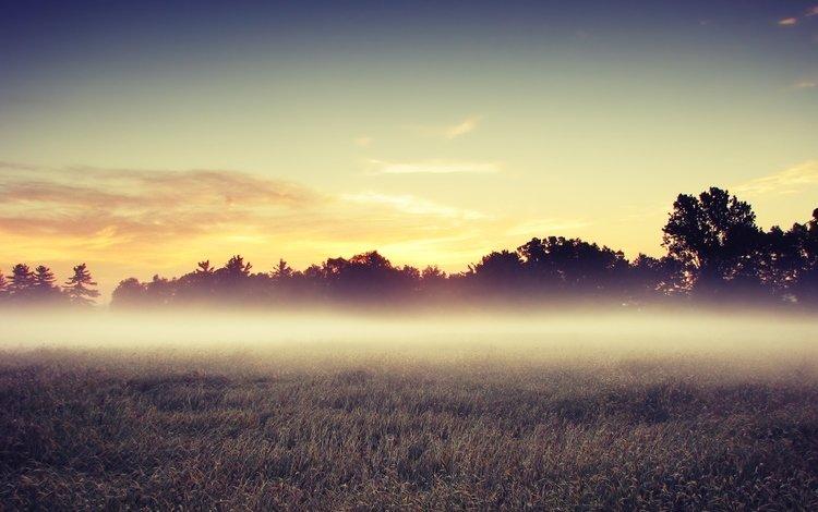 деревья, утро, поле, trees, morning, field