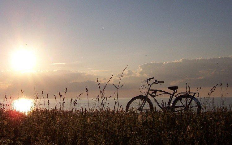 трава, солнце, велосипед, grass, the sun, bike