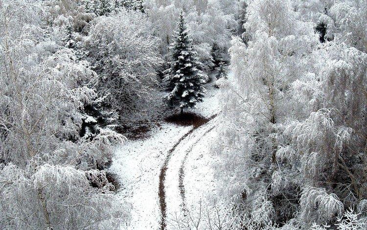 дорога, деревья, снег, обои, зима, winer, деревь, на природе, автодорога, road, trees, snow, wallpaper, winter, nature