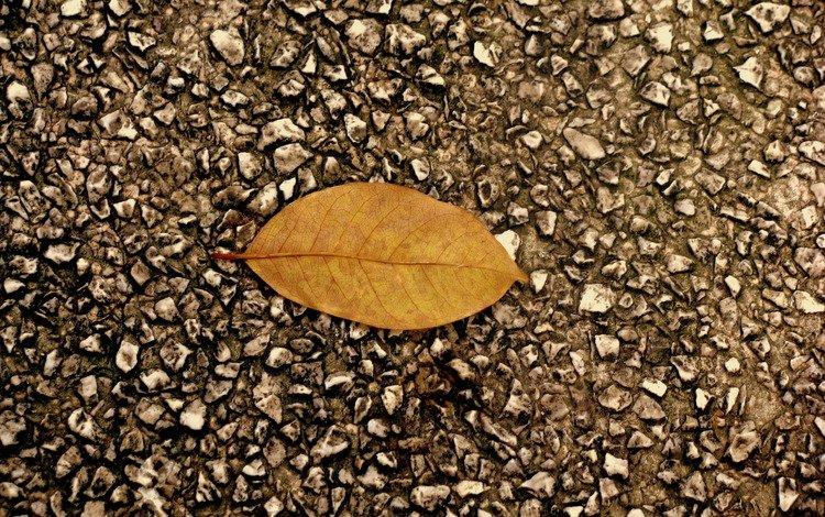 камни, листок, осень, асфальт, гравий, stones, leaf, autumn, asphalt, gravel