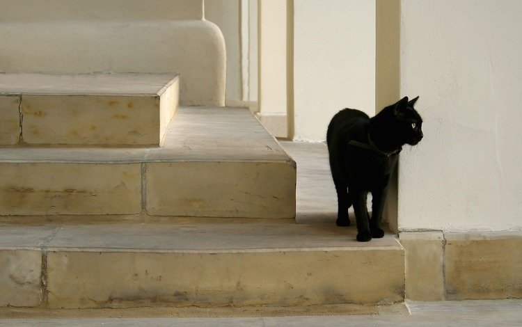 cat, on the stairs, black