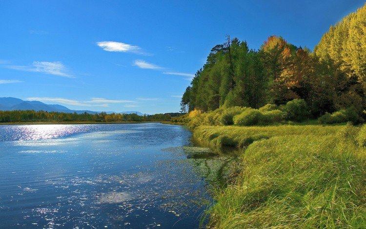 Красивый берег реки