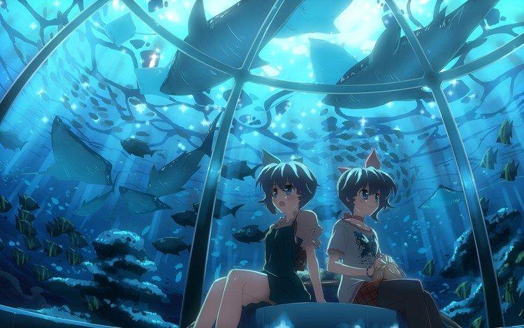 рыбы, аниме, аквариум, океанариум, fish, anime, aquarium