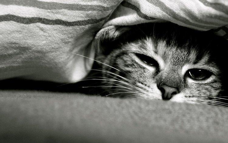 кот, кошка, взгляд, cat, look