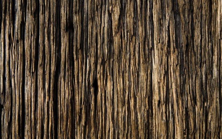 дерево, обоя, красивая, tree, wallpaper, beautiful