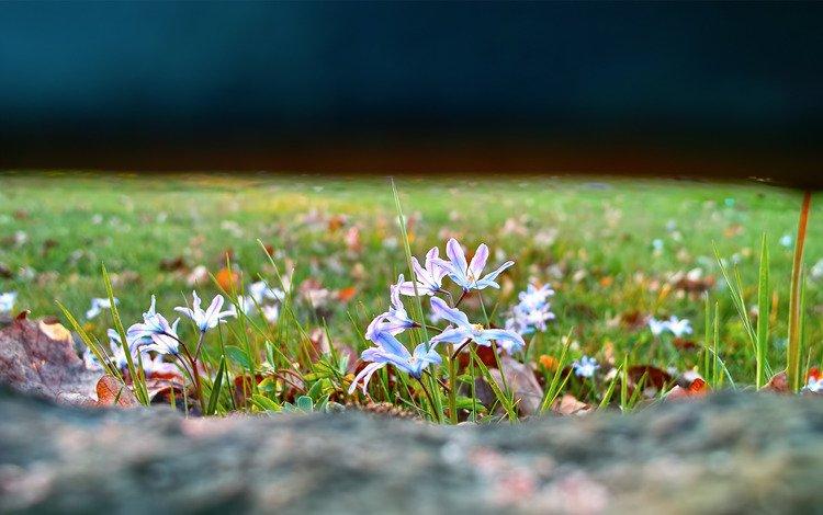 цветы, трава, природа, фокус камеры, поляна, flowers, grass, nature, the focus of the camera, glade